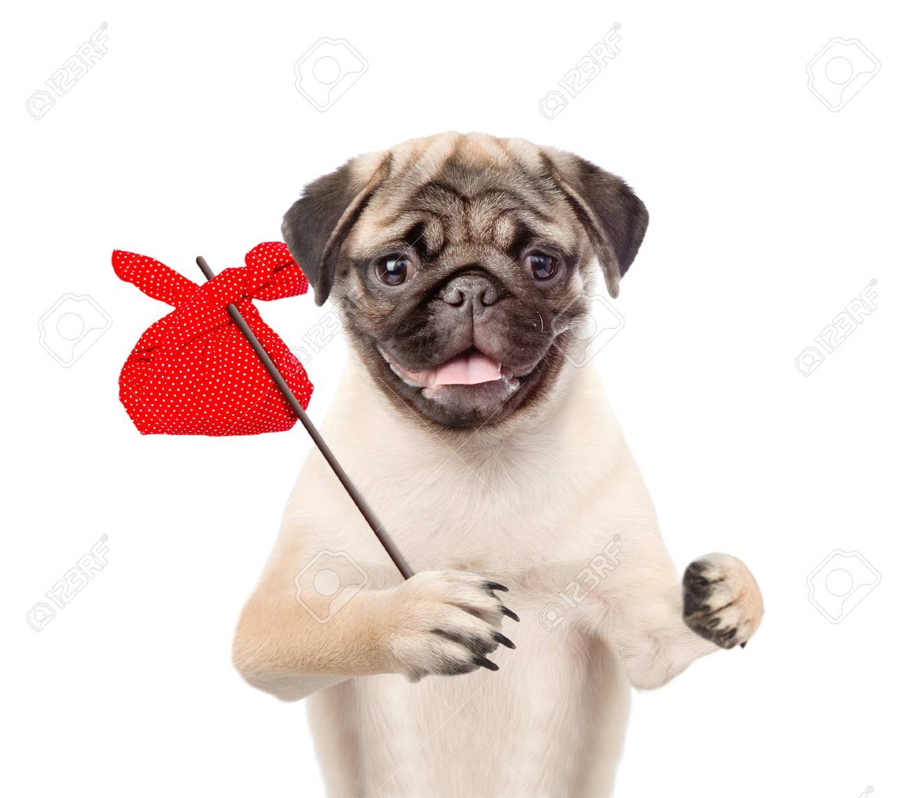 90540669-funny-puppy-with-a-stick-and-a-red-bag-.jpg